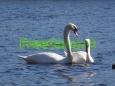 Ekologiskas_Poilsis_FreeCamp.lt_13